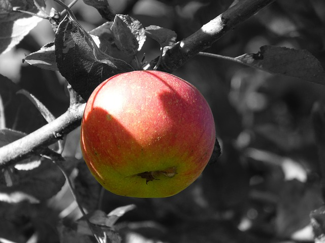 red-apple-bw-leaves